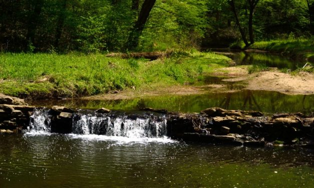 Embracing Spring in Raleigh: Umstead State Park