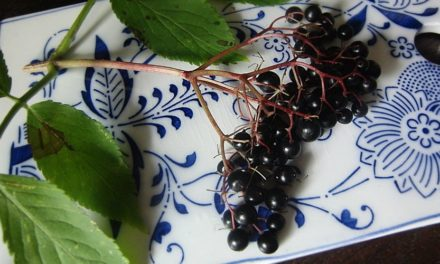 Elderberry Health Benefits: Helpful Tips Then and Now