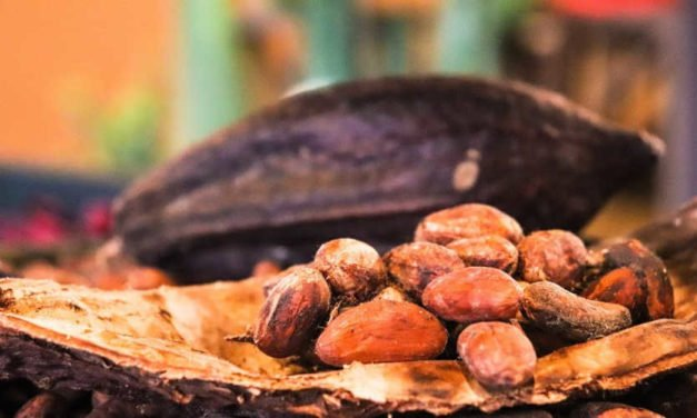 What Do Ancient Tales Reveal about Where Chocolate Comes From?