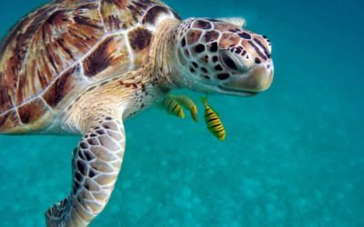 Best Excursions in Grand Cayman for Animal Lovers